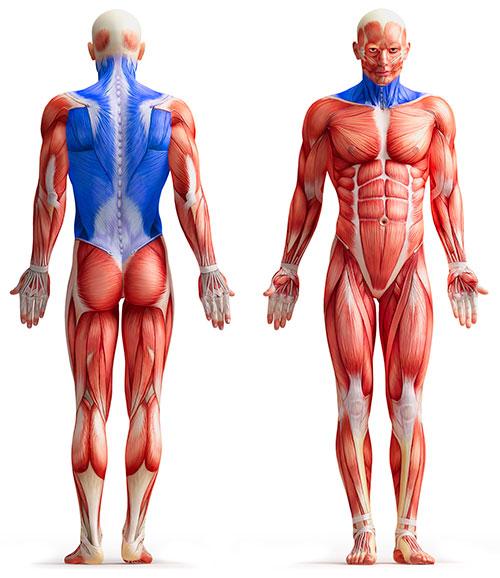 TCM Sportmedizin - Rücken und Nacken